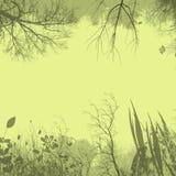 背景植物群 库存照片