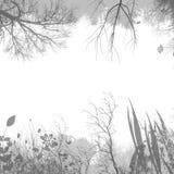 背景植物群 免版税库存照片