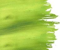 背景椰子绿皮书 库存照片