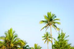 背景椰子设计空白例证的掌上型计算机 免版税库存照片