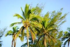 背景椰子设计空白例证的掌上型计算机 图库摄影