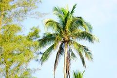 背景椰子设计空白例证的掌上型计算机 库存照片