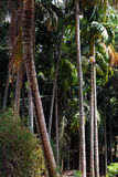 背景椰子设计空白例证的掌上型计算机 免版税库存图片