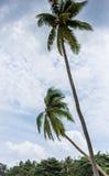 背景椰子设计空白例证的掌上型计算机 免版税图库摄影