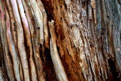 背景楼层被碾压的teakwook纹理木头 图库摄影