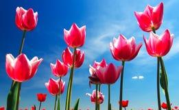 背景横幅开花表单少许桃红色螺旋 库存照片
