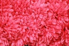 背景横幅开花表单少许桃红色螺旋 免版税库存照片