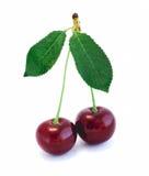 背景樱桃容易地提取的查出的白色 图库摄影
