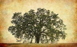 背景橡木纹理结构树 向量例证