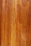 背景橡木 库存照片