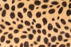 背景毛皮豹子纹理 免版税库存图片