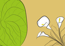 背景水芋属 免版税图库摄影