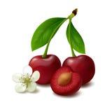 背景浆果樱桃手指保留白色 免版税图库摄影