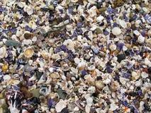 背景海滩报道了壳 免版税库存照片