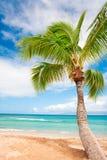 背景海滩棕榈树 免版税库存照片
