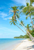 背景海滩热带假期 库存图片