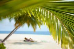 背景海滩睡椅甲板 免版税库存照片