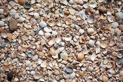 背景海滩海扇壳好表面使用 免版税库存图片