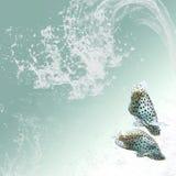 背景清楚的鱼热带二杯水 免版税库存照片