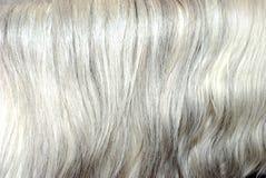 背景灰色头发鬃毛 免版税库存图片