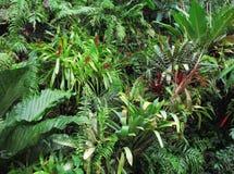 背景热带植物群的森林 免版税库存图片
