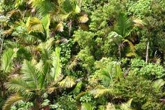 背景热带植被 免版税库存照片