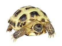 背景照片乌龟白色 库存照片