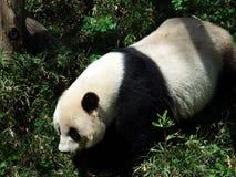 背景熊动画片例证熊猫样式白色 库存图片