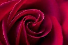 背景特写镜头花自然红色上升了 图库摄影