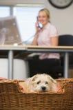 背景狗家庭位于的办公室妇女 库存图片