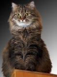 背景猫关闭梯度上升 库存照片