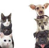 背景猫关闭白色的狗半枪口纵向 免版税库存照片