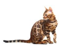 背景猫查出的白色 图库摄影