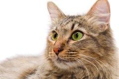 背景猫红发白色 免版税图库摄影