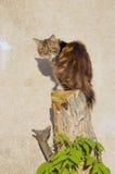 背景猫被剪切的坐的结构树墙壁 免版税库存图片