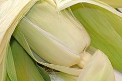 背景玉米壳 库存图片