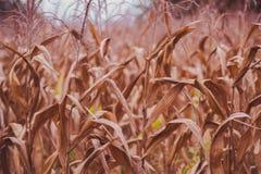 背景玉米夜间域小山 免版税库存图片