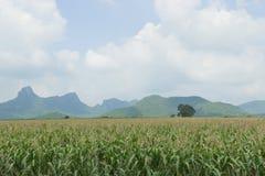 背景玉米夜间域小山 库存图片