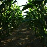 背景玉米夜间域小山 免版税图库摄影