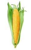 背景玉米查出的甜白色 库存照片