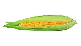 背景玉米查出的甜白色 库存图片