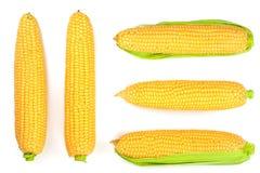 背景玉米查出的白色 顶视图 集合或汇集 免版税库存照片