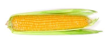 背景玉米查出的白色 顶视图 库存照片