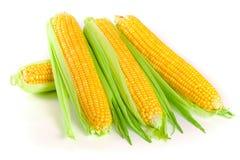 背景玉米查出的白色 顶视图 免版税库存图片