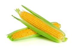 背景玉米查出的白色 免版税库存图片