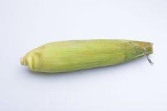 背景玉米棒玉米拍摄了白色 免版税库存图片
