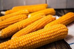 背景玉米棒玉米拍摄了白色 库存图片