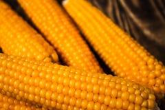 背景玉米棒玉米拍摄了白色 免版税库存照片