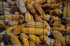 背景玉米烘干了 免版税库存图片