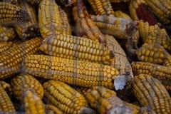 背景玉米烘干了 免版税库存照片
